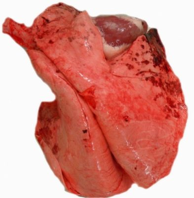 lambs lung